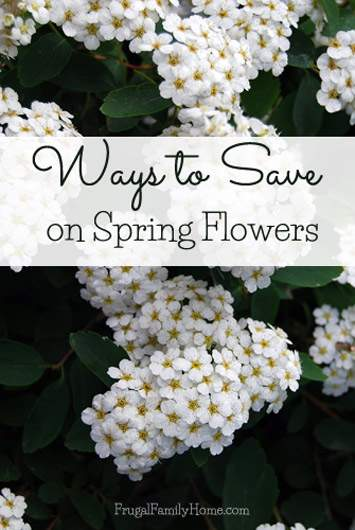 Ways to Save Money on Spring Flowers