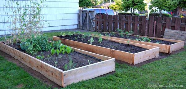 We used cedar to build our raised bed. They should last quite a while and look great too.