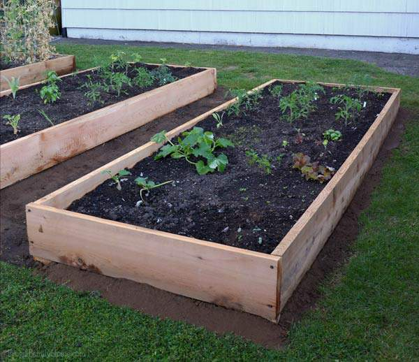 Tips for replacing the old worn out boards on your raised beds.